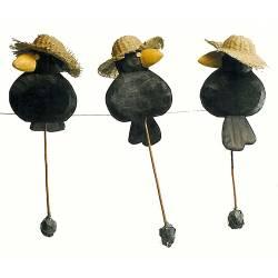 Cuervo con sombrero