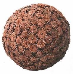 Bola de piñas