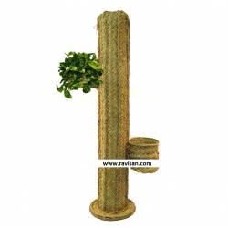 Cactus esparto con maceteros